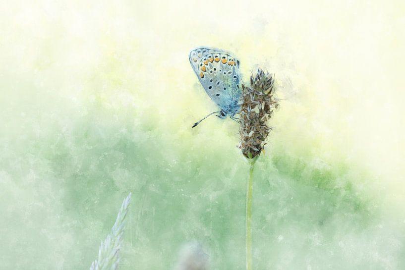 Vlinder 2 van Silvia Creemers
