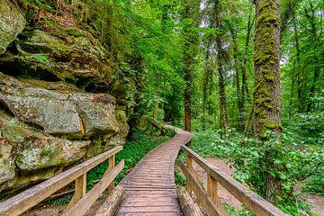 Mullerthal trail Luxemburg. van marc meijlaers