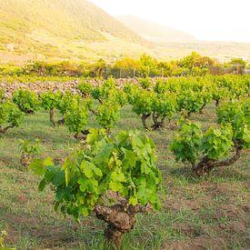 Pantelleria van Jeroen Berends
