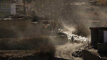 'Herder met schapen', Tatopani- Nepal von Martine Joanne