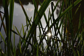 Brillantes Sonnenlicht durch lange Grashalme am Ufer eines Flusses von Breezy Photography and Design