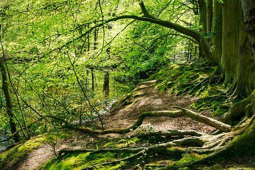 Bos in de lente van Michel van Kooten