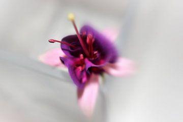 Fuchsia von Martine Affre Eisenlohr