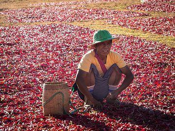 Myanmar - Kalaw - De peperplukker
