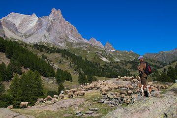 Hirte in den französischen Alpen von Dennis Wierenga