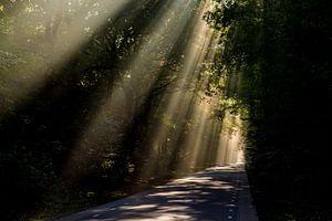 Zonnestralen over weg