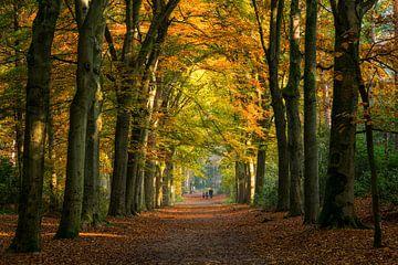 Wandelaars in een herfst bos van Bram van Broekhoven