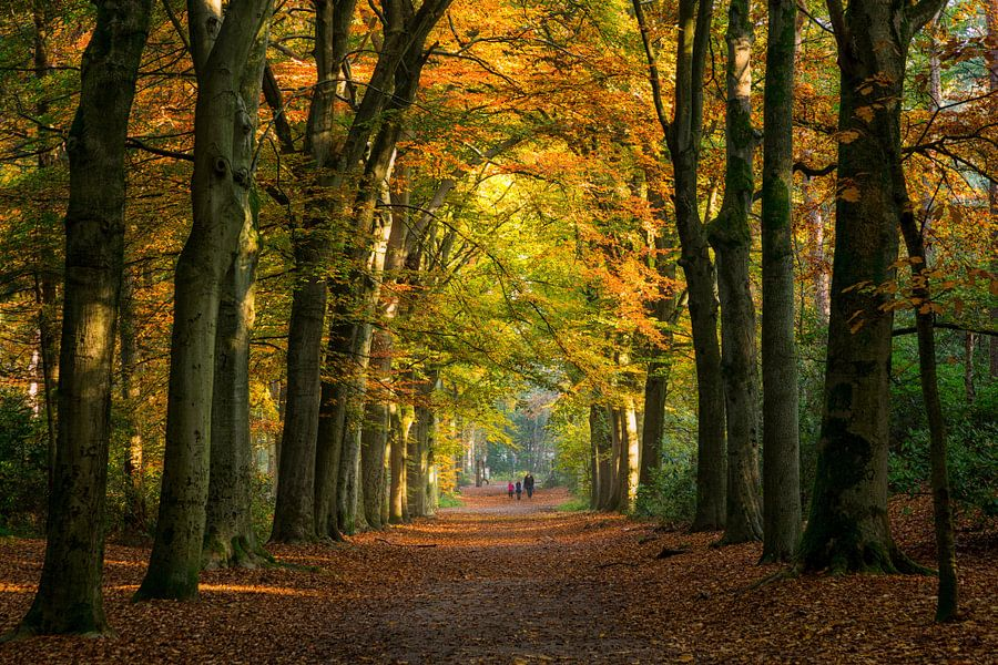 Wandelaars in een herfst bos