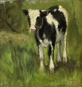 Kalb, schwarz-weiß gefleckt, Geo Poggenbeek