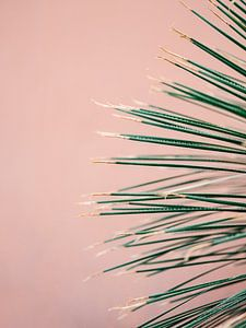 Green on coral | Botanische moderne foto print | Tropische vibe kunst Art Print