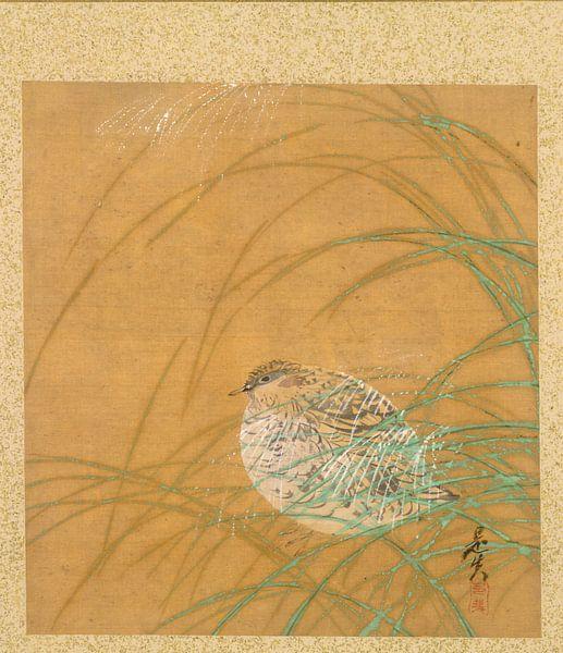 Shibata Zeshin - Blad uit Album met Seizoensgebonden Thema's, Kustlijn met Vogels van 1000 Schilderijen