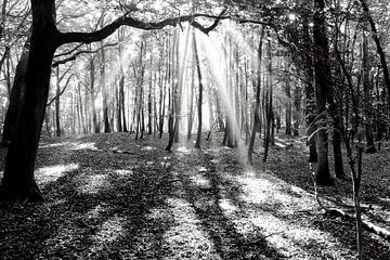 Overstraling in het bos von Bob Bleeker