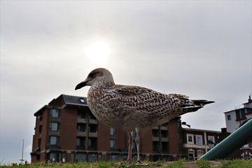 Möwe vor dem Hotel von Eline Langedijk