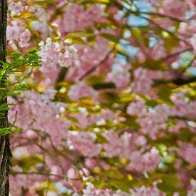 Pterocarya en de Prunus van Eva Masselink