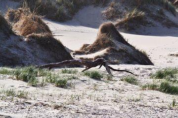Drijfhout strand op Texel von Hans Oudshoorn