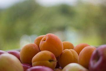 Fruit von Hans Winterink