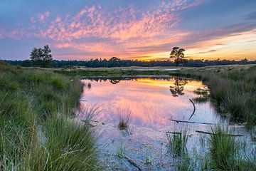Kleurrijke zonsondergang op de heide met spiegeling in het water sur Sjaak den Breeje