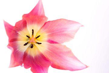 Pink van Esther Valstar