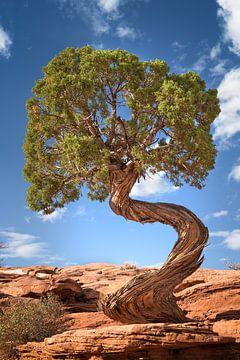 Alleenstaande boom in het zuidwesten van de VS van Fine Art Fotografie