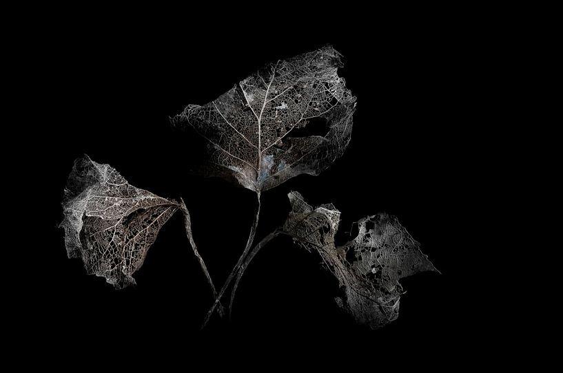 Verval -   Decay  - Verfall -  pourriture van Kitty Stevens