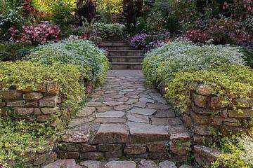Garten mit schönen blühenden Pflanzen auf beiden Seiten des Weges