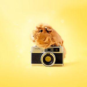 Cavia Camera