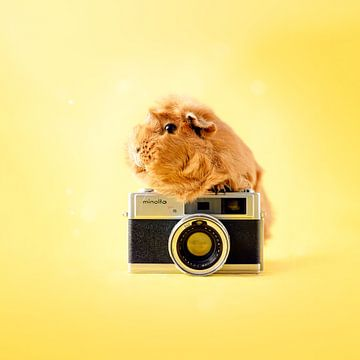 Meerschweinchen-Kamera von Marloes van Antwerpen