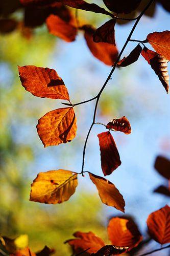 golden fall II