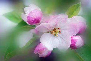 Douceur florale