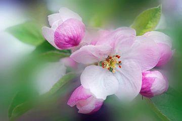 Douceur florale sur Martine Affre Eisenlohr