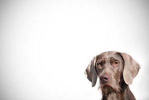 Cornered van Mogi Hondenfotografie
