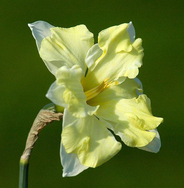 Narcis Alleen van Brian Morgan