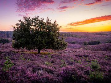 Purpleland von Fernando Salgado