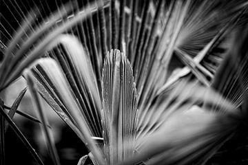 Palm van Rob Boon