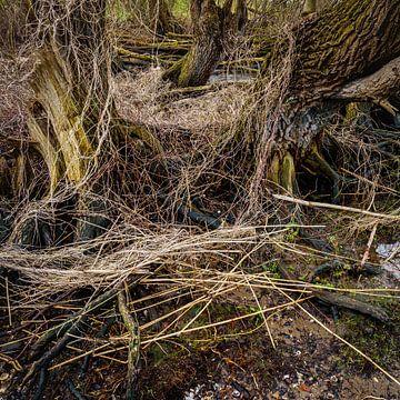 Baum-Wildnis von Eugene Winthagen