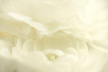 Witte bloem von Gonnie van de Schans
