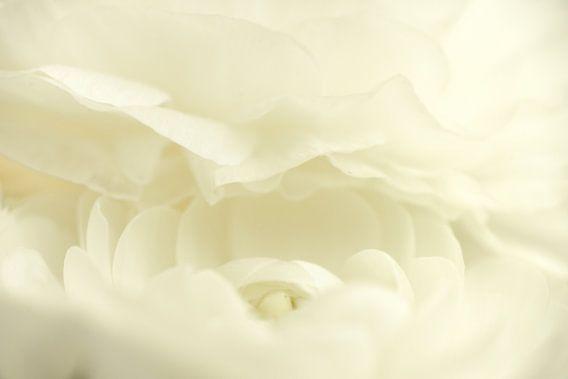 Witte bloem van Gonnie van de Schans