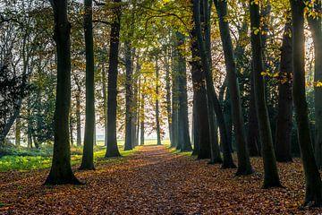 Sonnenaufgang in einem alten Wald. von Ruurd Dankloff