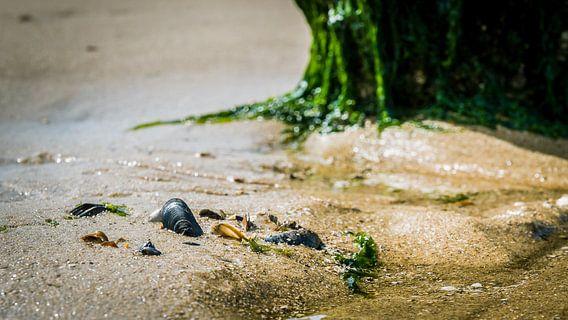 Strand met schelpen en zeewier