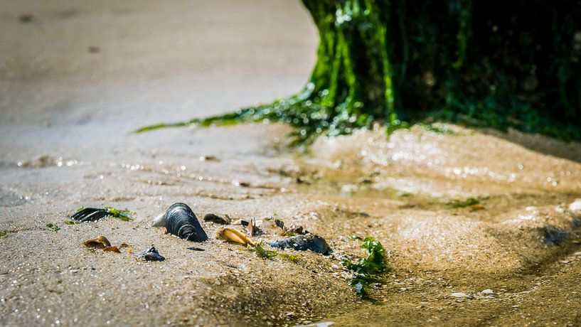 Strand met schelpen en zeewier van Fotografiecor .nl