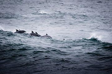 Dolfijnen bij Kaapstad, Zuid-Afrika van Marcel Alsemgeest