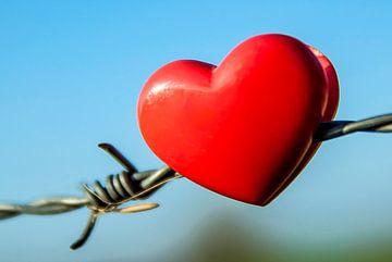 Heart on the fence van