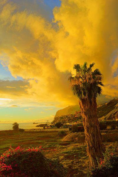 Palmboom en gele wolken