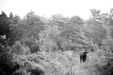 Beest in bos von Peter Geluk
