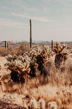 Arizona Wüste Amerika von Amber den Oudsten