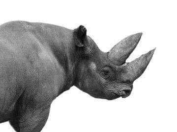 Rhino sur Fabian  van Bakel