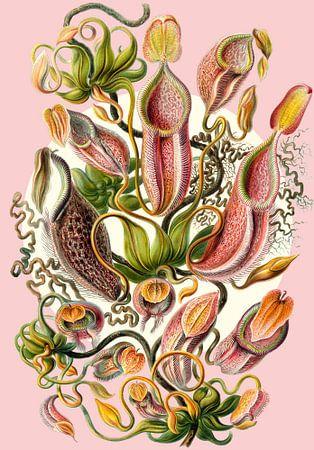 The Carnivorous Plants van Marja van den Hurk