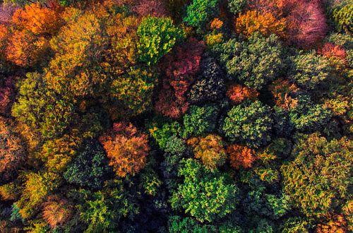 Couleurs d'automne sur