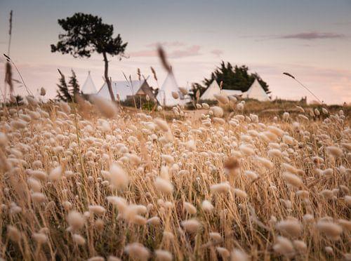Dream Camp van David Hanlon