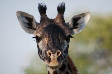 Giraffe portret van Robin Langelaar